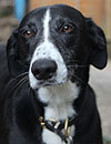 charlie-the-dog-portrait-photo