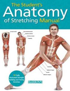 anatomy of stretching manual