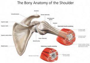RCS Thumbnail anatomy