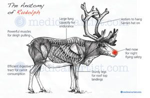 The anatomy of Rudolph